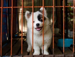 Best Dog Crates under $100 – 2017 Reviews & Guide